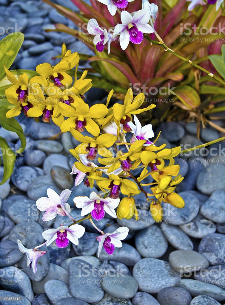 Orchids and Stone royalty-free stock photo