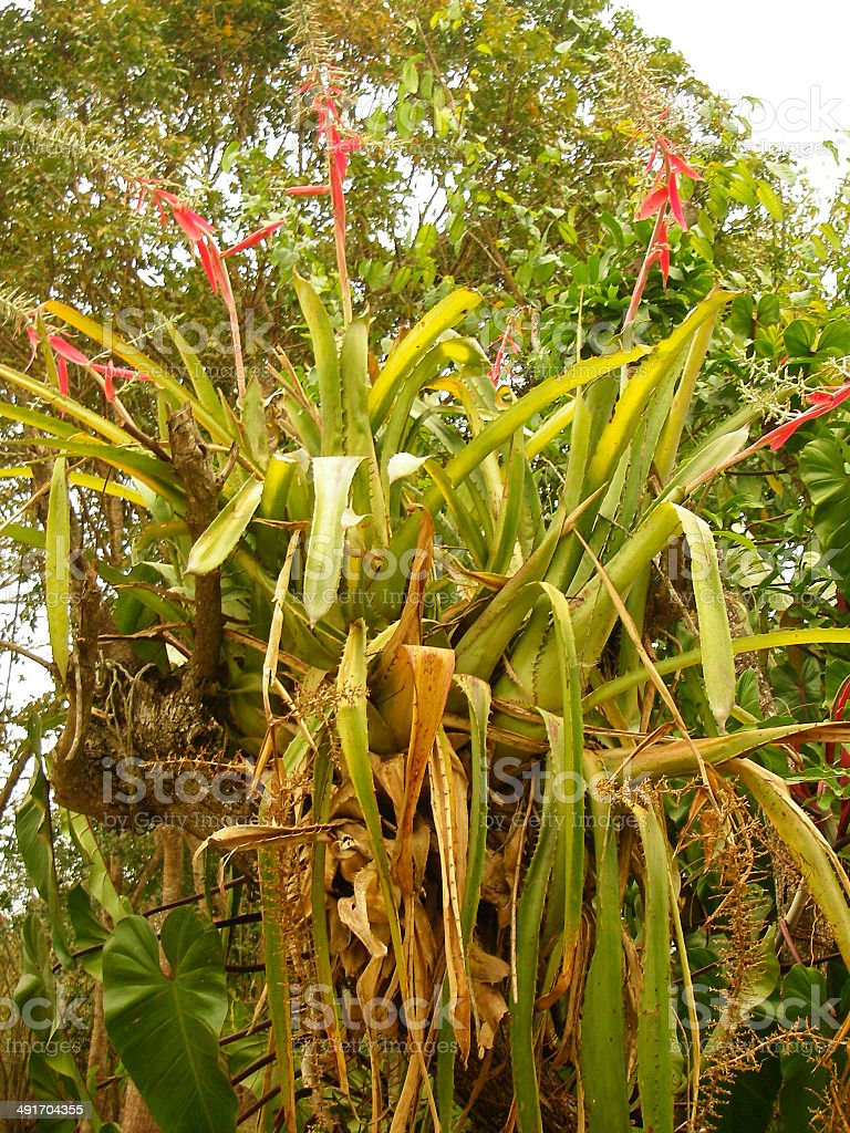 Orchids and Tropical Epiphytes in Rainforest Tree Copan Honduras stock photo