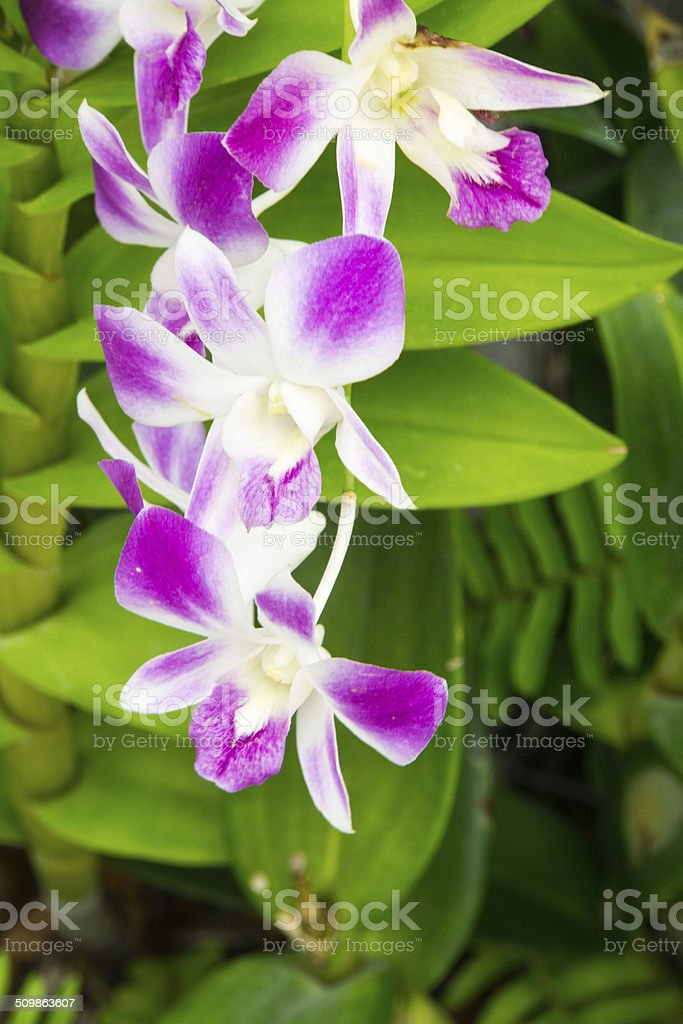 Orchids, beauty in form and color. stock photo