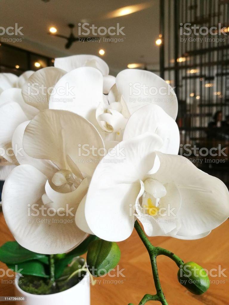 Orquídeas Decoradas En Frasco En El Sofá Situado En La