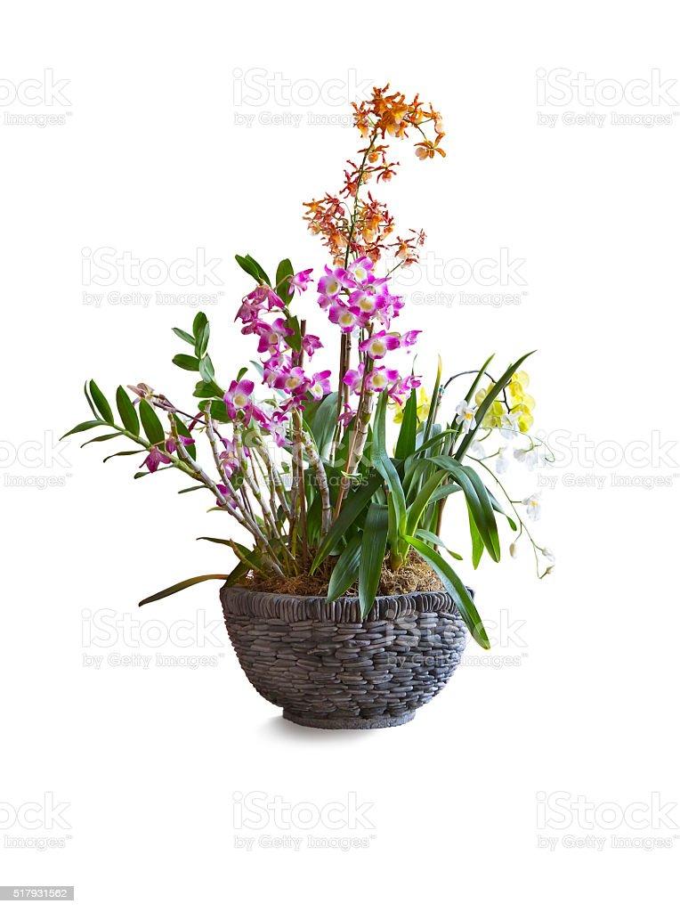 Orchideen Blumenarrangement In Topf Auf Weißer Hintergrund Stock ...