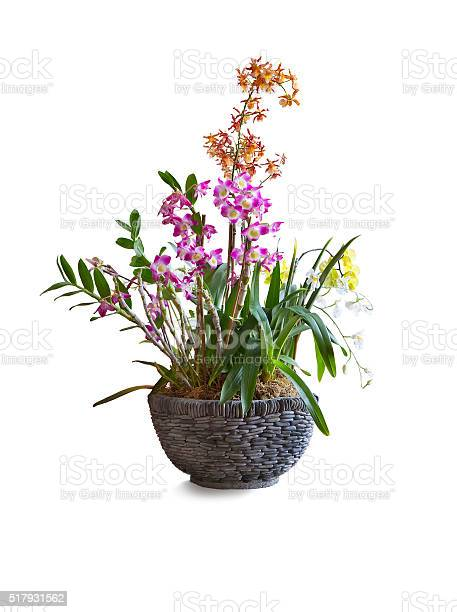 Orchids Floral Arrangement In Pot On White Background Stock Photo Download Image Now Istock