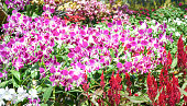 Orchids flowers bloom in spring adorn the beauty of nature