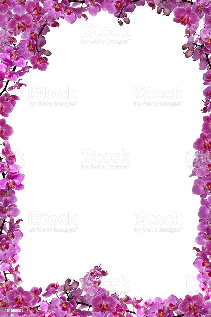 Orchids Frame Border Stock Photo & More Pictures of Copy Space   iStock