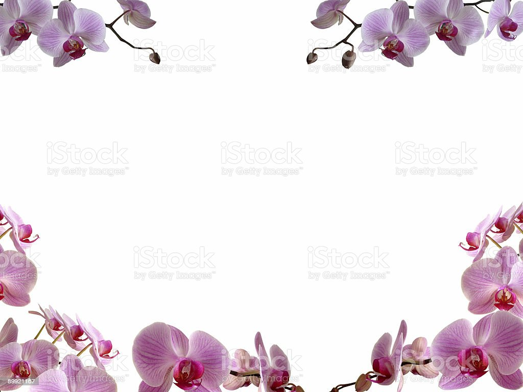 Royalty Free Orchid Border Pictures Images And Stock