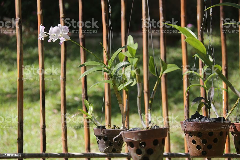 Orchids from the Garden at the Hotel in Vietnam stock photo