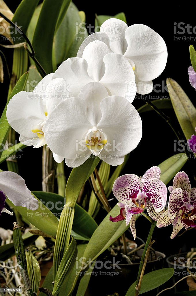 Orchids garden royalty-free stock photo