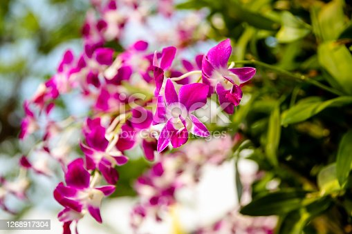 Orchids hanging from a streetside planter in Bangkok Thailand
