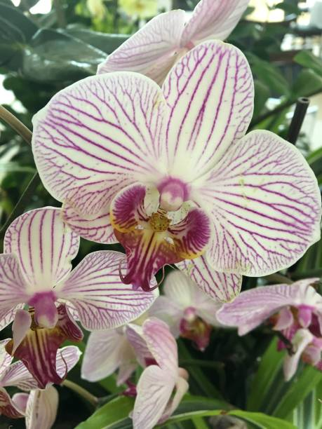 Orchids In Bloom stock photo