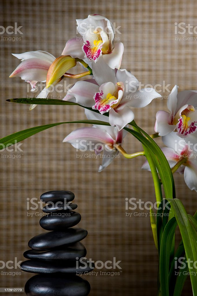 Orchids in Bloom royalty-free stock photo