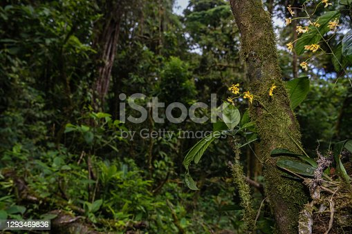 Wide angle shot of flowers and plants in rainforest