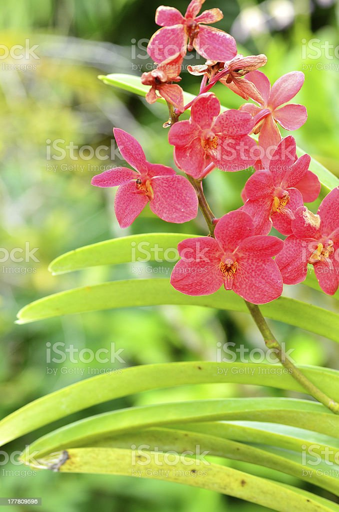 orchids in spring royalty-free stock photo
