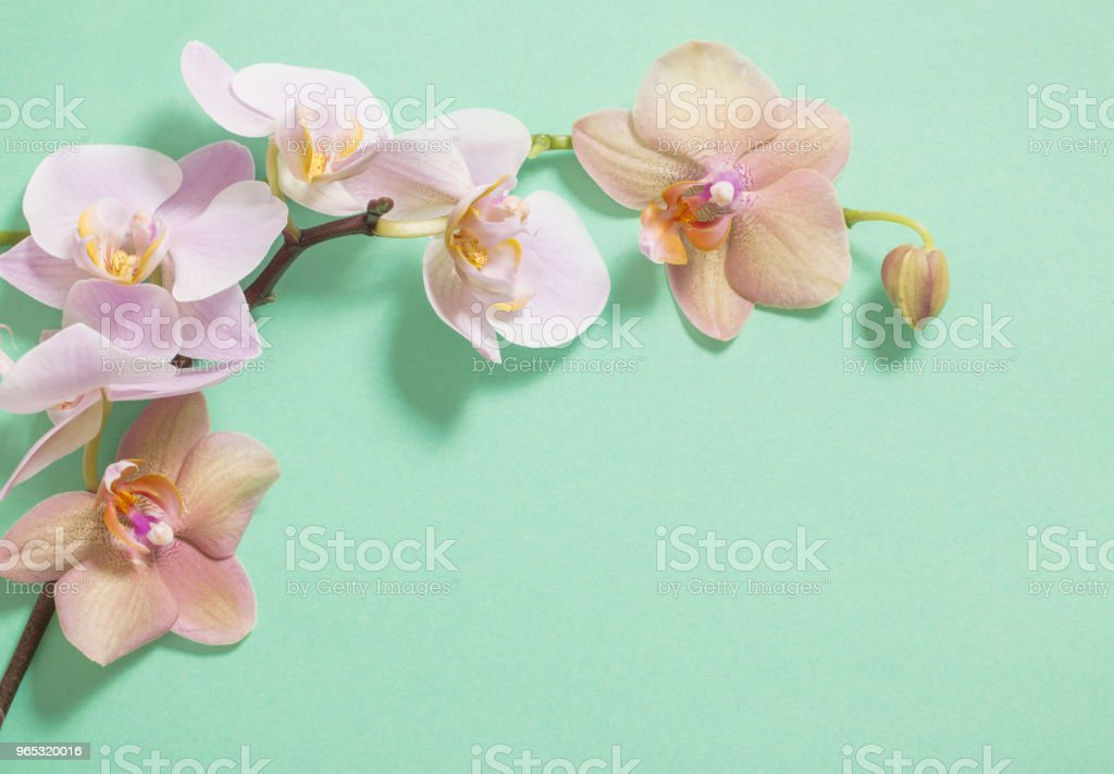 orchids on green background zbiór zdjęć royalty-free