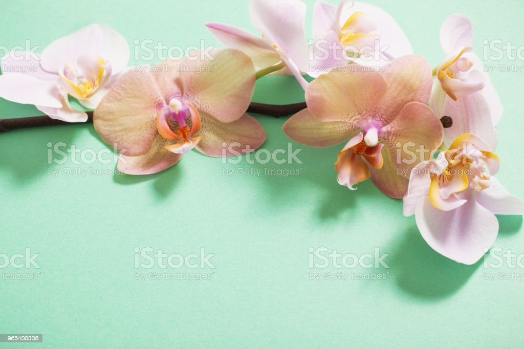 orchids on green background royalty-free stock photo