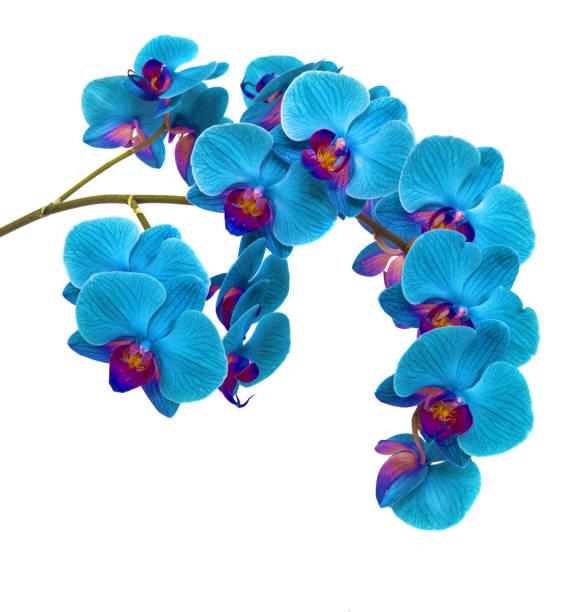 Orchideen auf isolierte Hintergrund. schöne Blume Zweige Orchideen auf weißem Hintergrund – Foto