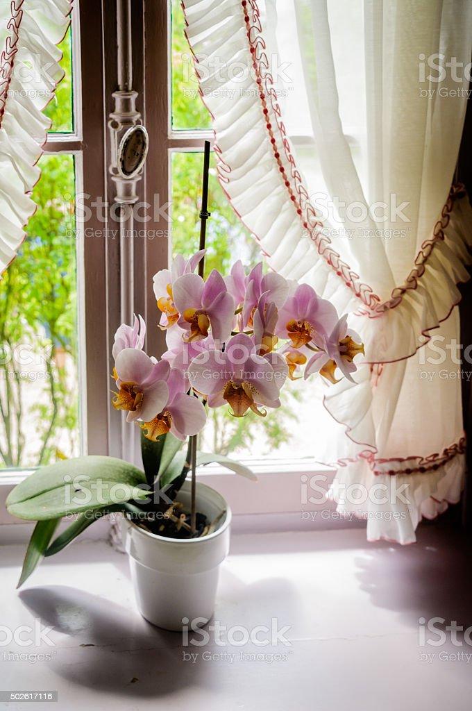 Orchids on the Windowsill stock photo