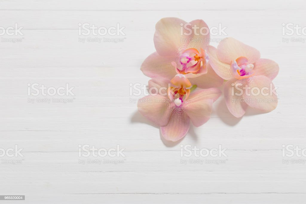 orchids on white wooden background royalty-free stock photo