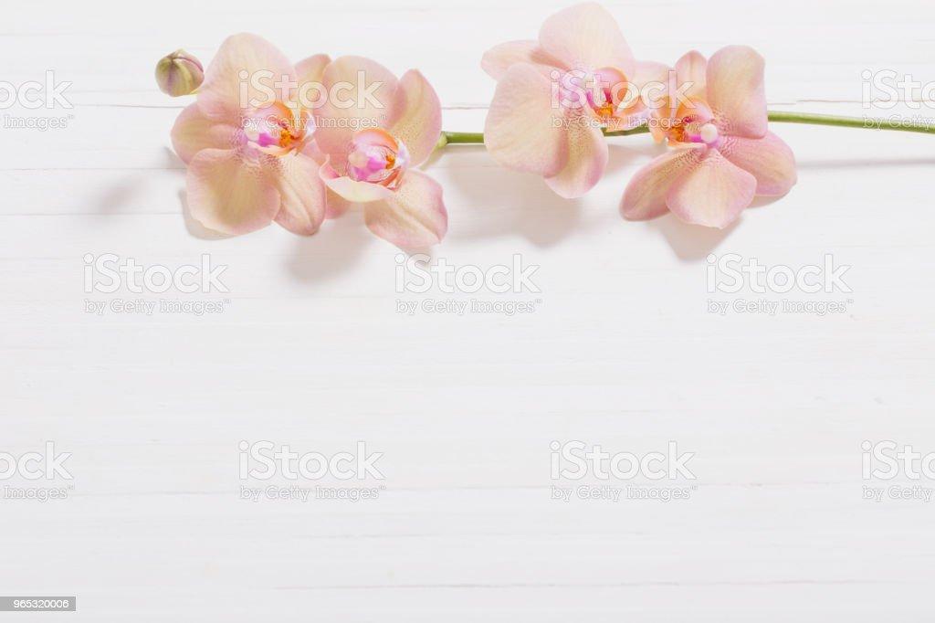 orchids on white wooden background zbiór zdjęć royalty-free