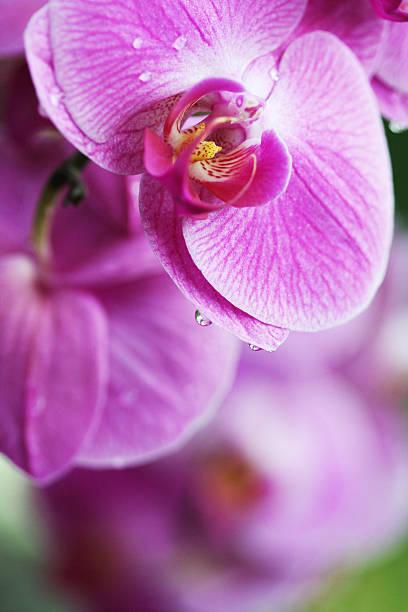 Orchids - foto de stock