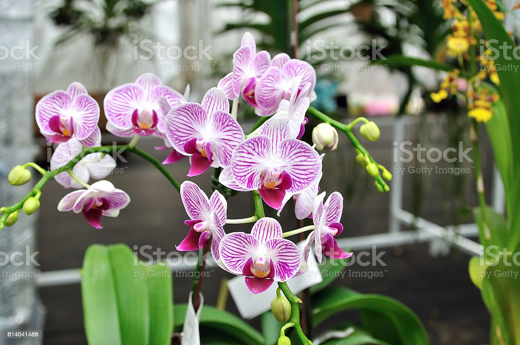 Orchids stock photo