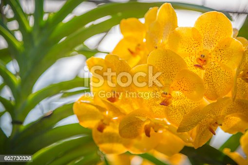 Orchid, Flower, Single Flower, Dendrobium, Plant