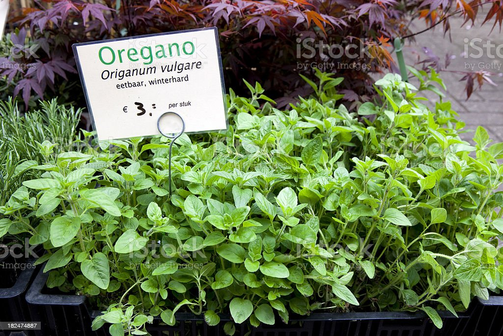 Oregano for Sale at Flower Market royalty-free stock photo