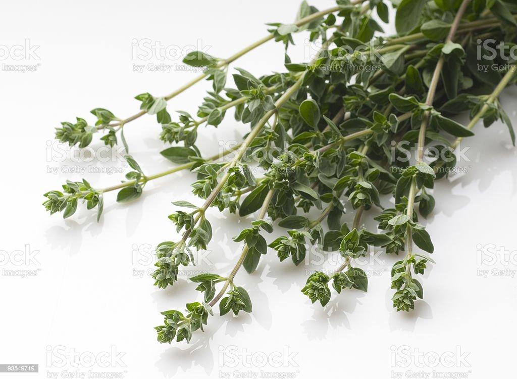 oregano herbs royalty-free stock photo