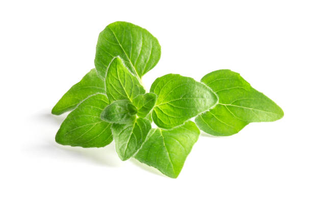 Oregano leaves isolated on a white background. Fresh herb spice Oregano leaves isolated on a white background. Fresh herb spice oregano stock pictures, royalty-free photos & images