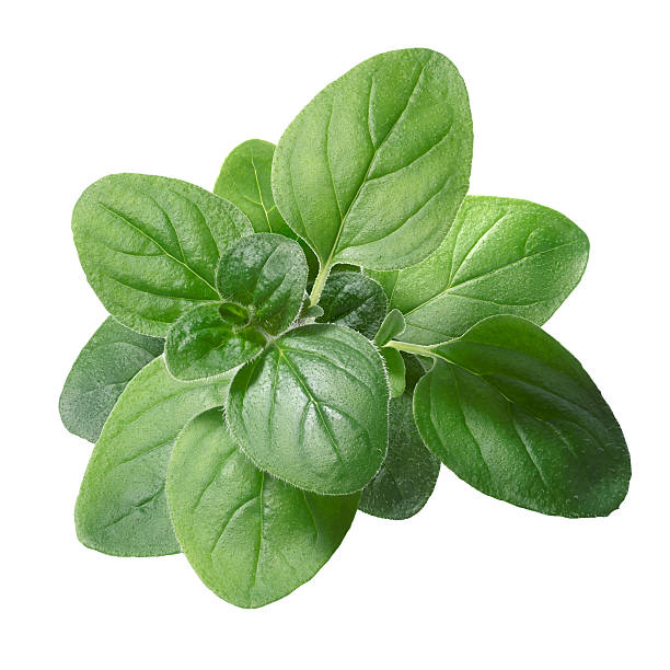 Oregano (Origanum vulgare) leaves Oregano (Origanum vulgare) leaves. Clipping path, infinite depth of field oregano stock pictures, royalty-free photos & images