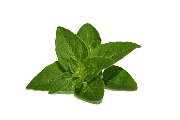 Oregano  oregano stock pictures, royalty-free photos & images