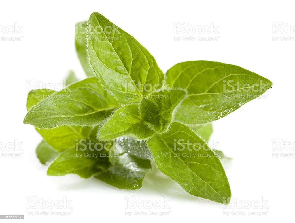 Oregano (Origanum vulgare) stock photo
