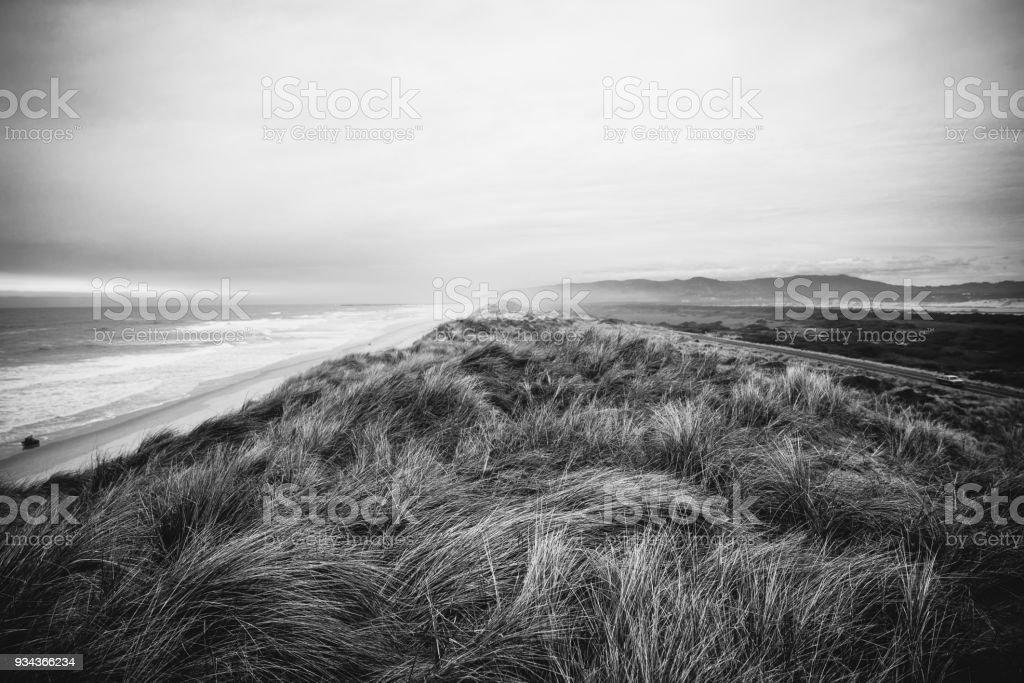 Oregon Coast weeds in the wind stock photo
