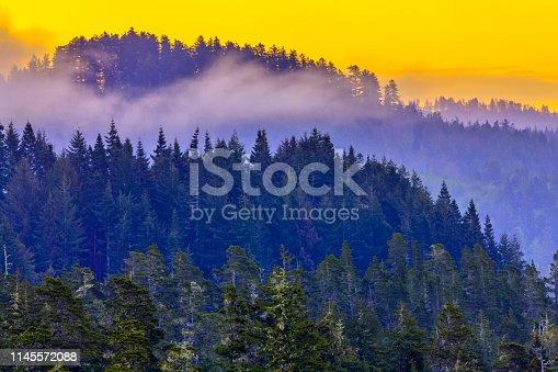 Temperate rain forest along the Oregon Coast