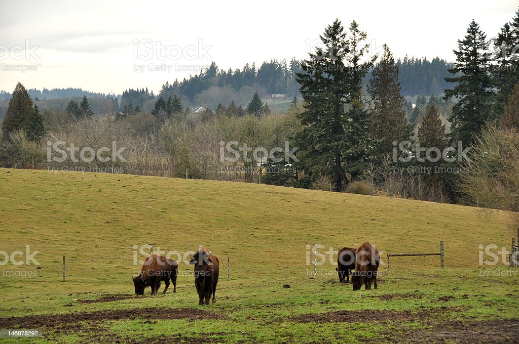 Oregon Farm and Bison stock photo