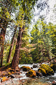 oregon forest with river