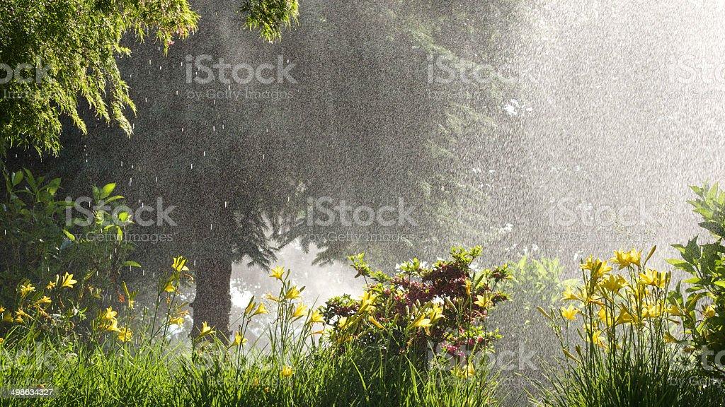 Oregon Garden Bushes Trees Hemerocallis Daylily Water Sprinkler Heavy Spray royalty-free stock photo