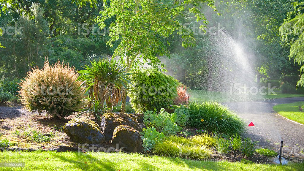 Oregon Garden Rose Glow Barberry Plants Water Sprinkler Stock Photo ...