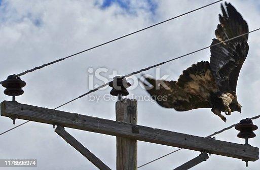 Malheur National Wildlife Refuge. Eastern Oregon's High Desert. Adult Golden Eagle.