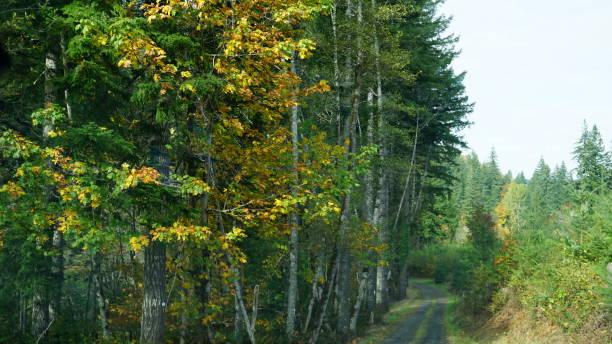 Oregon One Way Roads stock photo