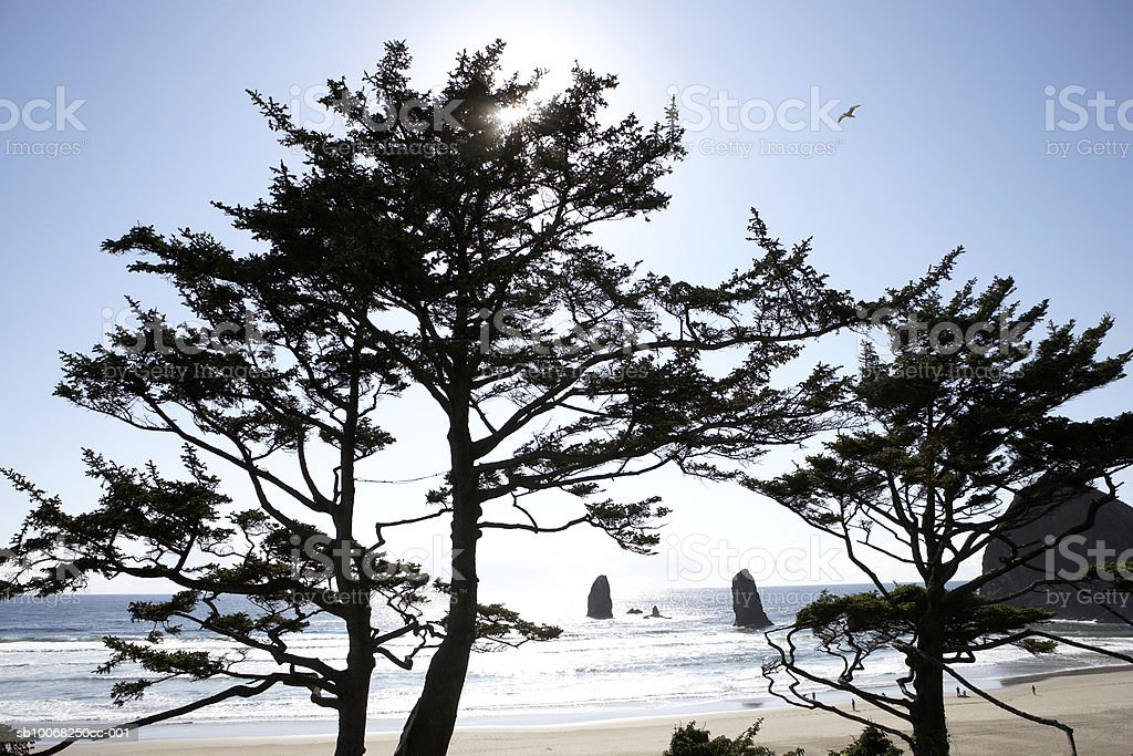 EUA, Oregon, árvores de pinho sobre Cannon beach foto de stock royalty-free
