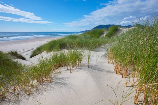Oregon Sand Dunes – Foto