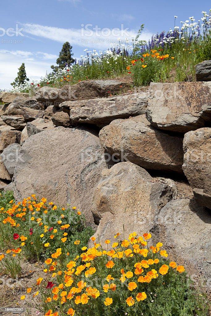 Oregon wildflowers stock photo