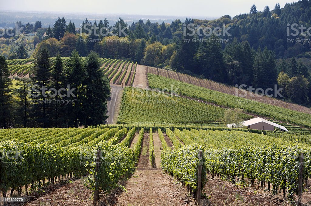Oregon wine country royalty-free stock photo