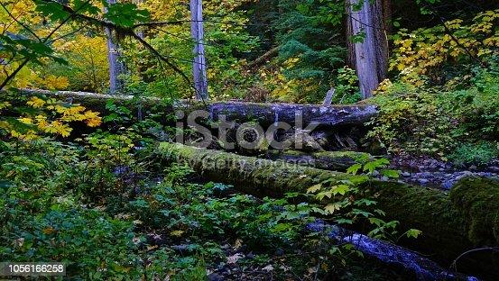 Northwest Oregon's Cascade Range Foothills. H.J. Andrews Experimental Forest. Willamette National Forest Zone. Lookout Creek Ravine.