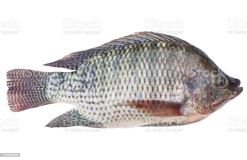 Fotografía de Oreochromis Niloticus Aislado O Mossambicus De Pescado ...