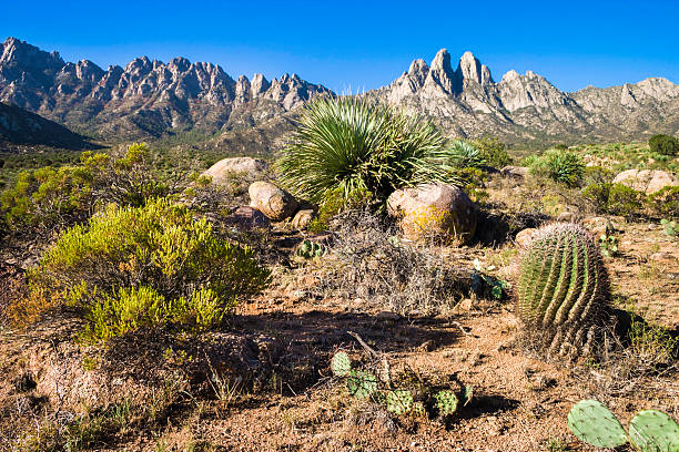 Organ Mountains seen from Aguirre Springs stock photo