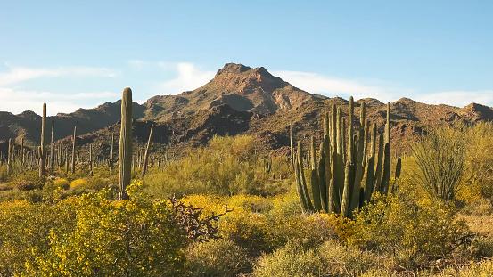 istock organ pipe cactus and ajo mnts in arizona, usa 1159951131