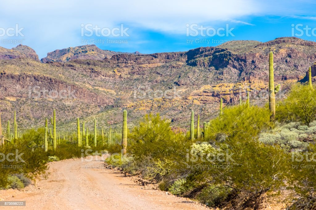 Organ Pipe Cactus National Monument in Arizona's Sonoran Desert - Ajo Mountain Loop Road Drive Leading to the Foothills stock photo