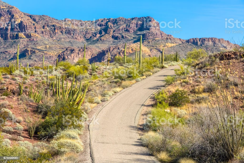 Organ Pipe Cactus National Monument in Arizona's Sonoran Desert - Ajo Mountain Drive Loop Road winds its way to Base of the Ajo Mountains under Brilliant Blue Sky stock photo