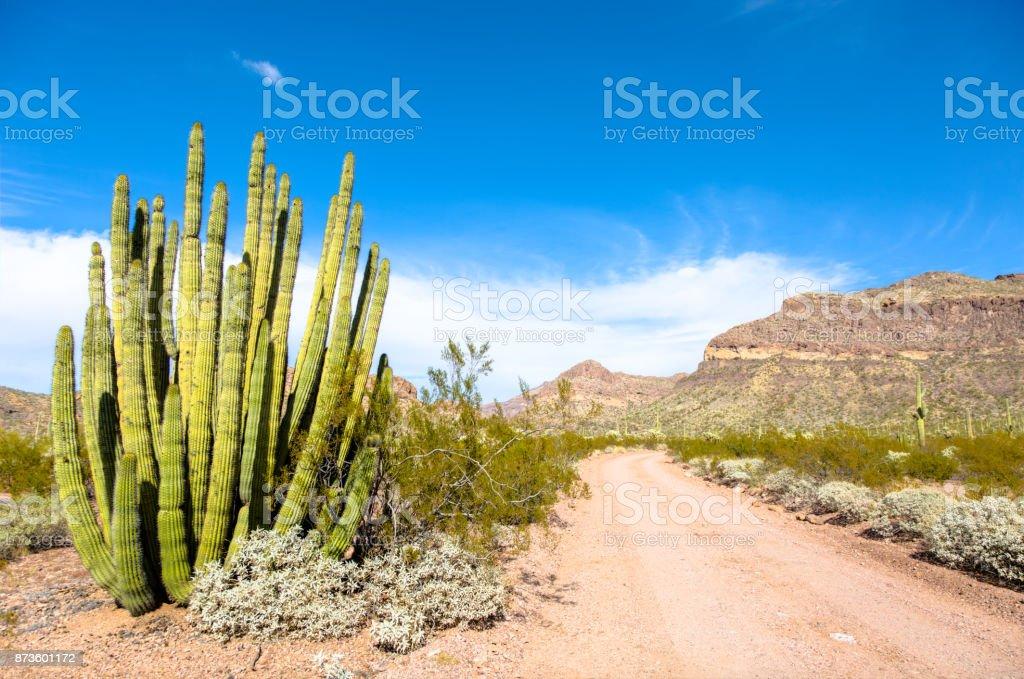 Organ Pipe Cactus National Monument in Arizona's Sonoran Desert - Ajo Mountain Drive Loop Road in Barren, Arid Desert stock photo